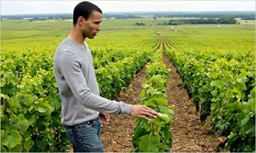 Ray Walker, American winemaker in Burgundy
