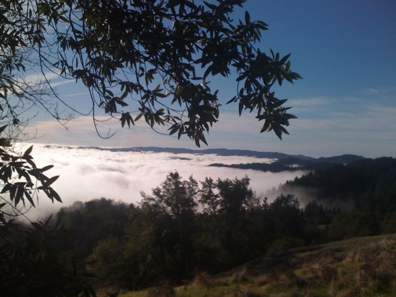 Austin Creek State Recreation Area overlooking Armstrong Redwoods in Guerneville - Sonoma County