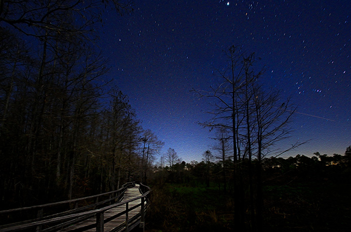 ???The Corkscrew Swamp Sanctuary Boardwalk at Night. Photo by R.J. Wiley