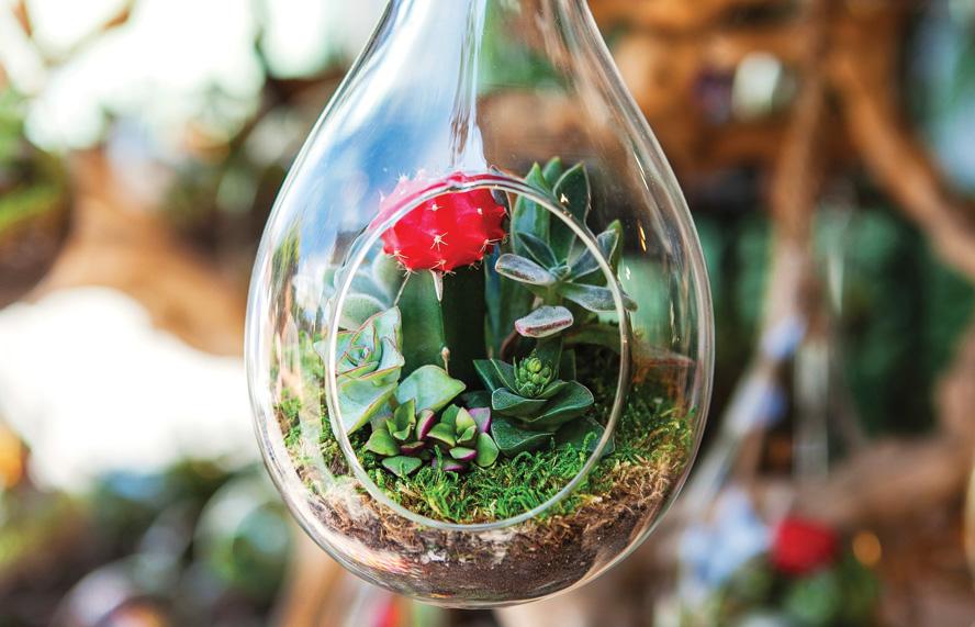 Hanging Terrarium for the Interior - Build Your Own terrarium