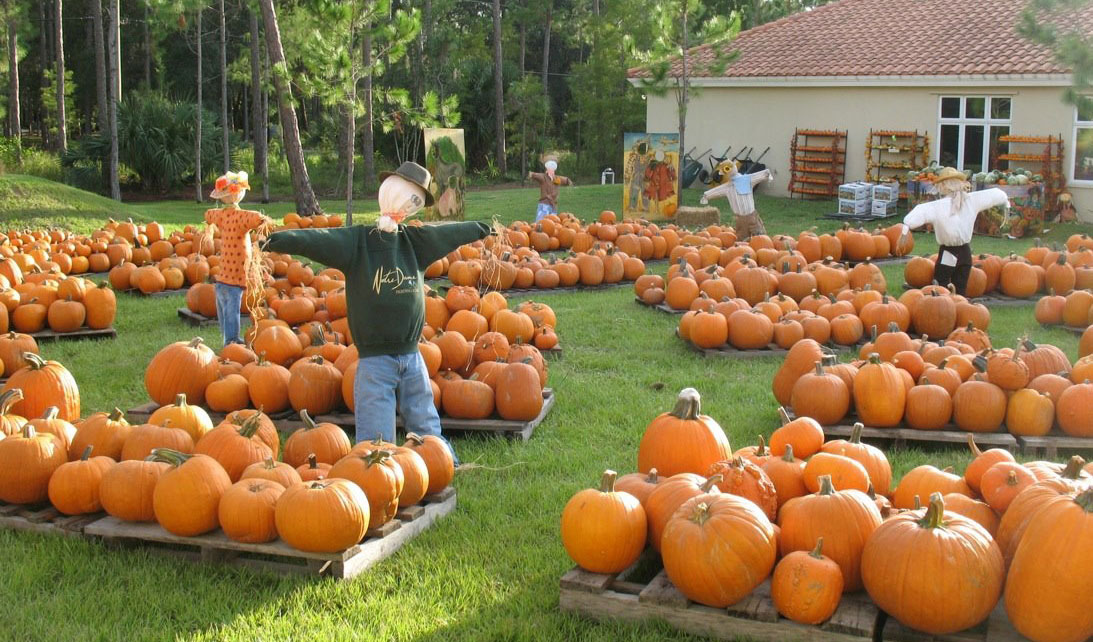 Pumpkin Patch at St. Monica's Episcopal Church - Naples
