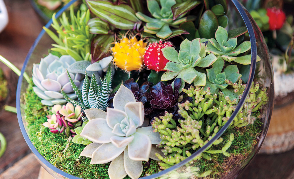 Build Your Own Terrarium with Succulents