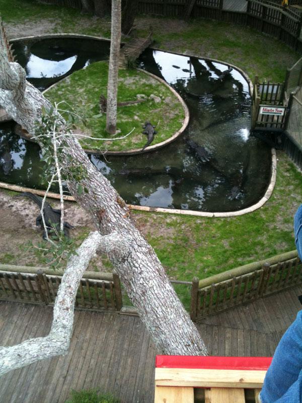 Crocodile Crossing - St. Augustine Alligator Farm