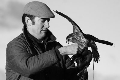 dromoland school of falconry