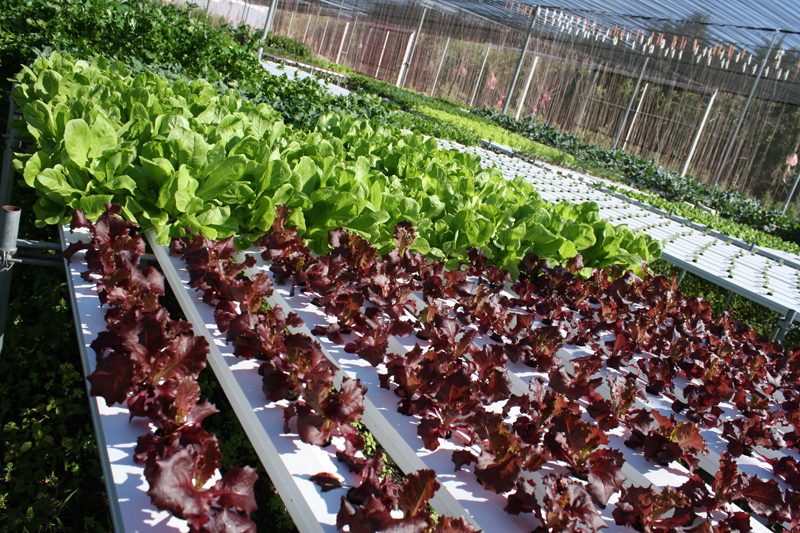 Fresh From Florida produce - Florida-grown comoditites