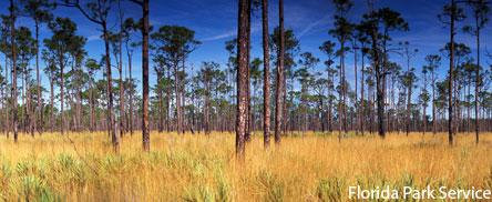 Jonathan Dickinson State Park - Pine sand scrub