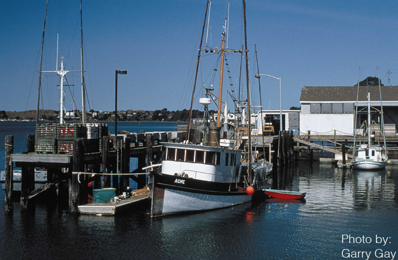 Moored fishing ships in Sonoma COunty, California
