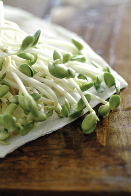 Sprouts - recipes for sprouts and salads