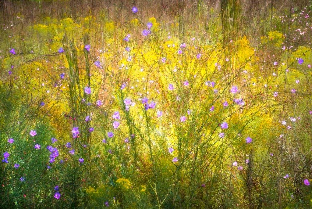 Laurie Meehan-Elmer - Wildflower Impressions - Rookery Bay - United Arts Council