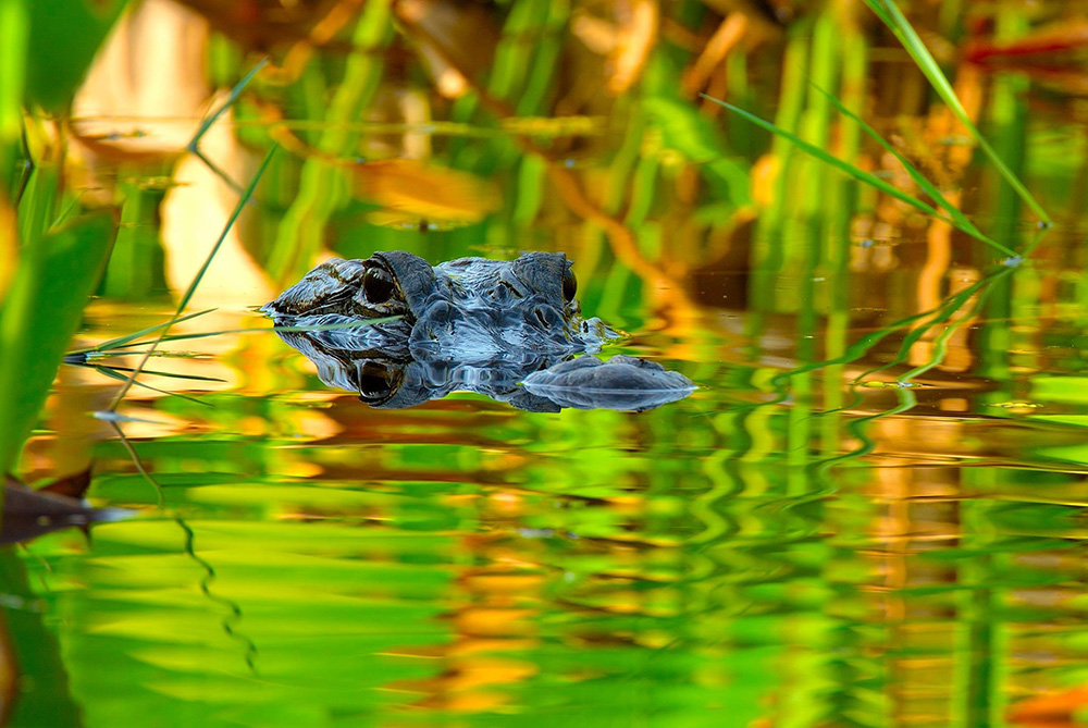 Celebrate the National Parks centennial in the Everglades.