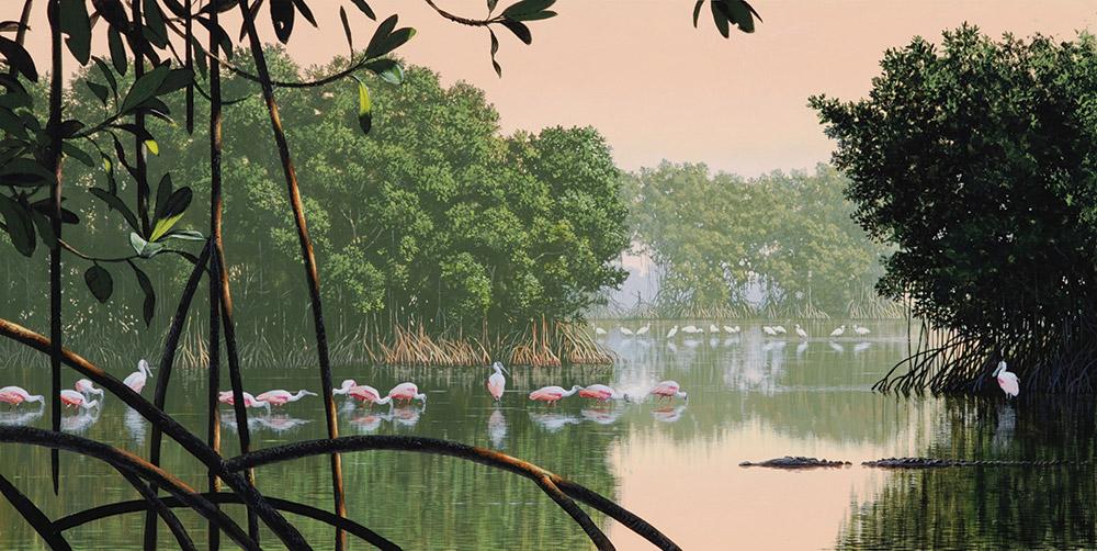 mangrove-morning_300