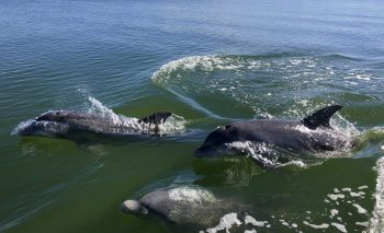 Science Nite at Rookery Bay – Dolphins!