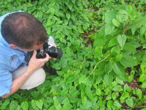 Essentials of Digital Photography