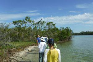 Teachers on the Estuary (TOTE) Workshop