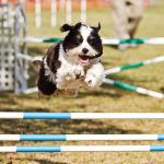 Ruffgers Dog University Course, photo by Aschley Kezeske 2