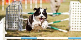 Ruffgers Dog University Course, photo by Aschley Kezeske 2