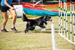 Ruffgers Dog University Course, photo by Aschley Kezeske 3