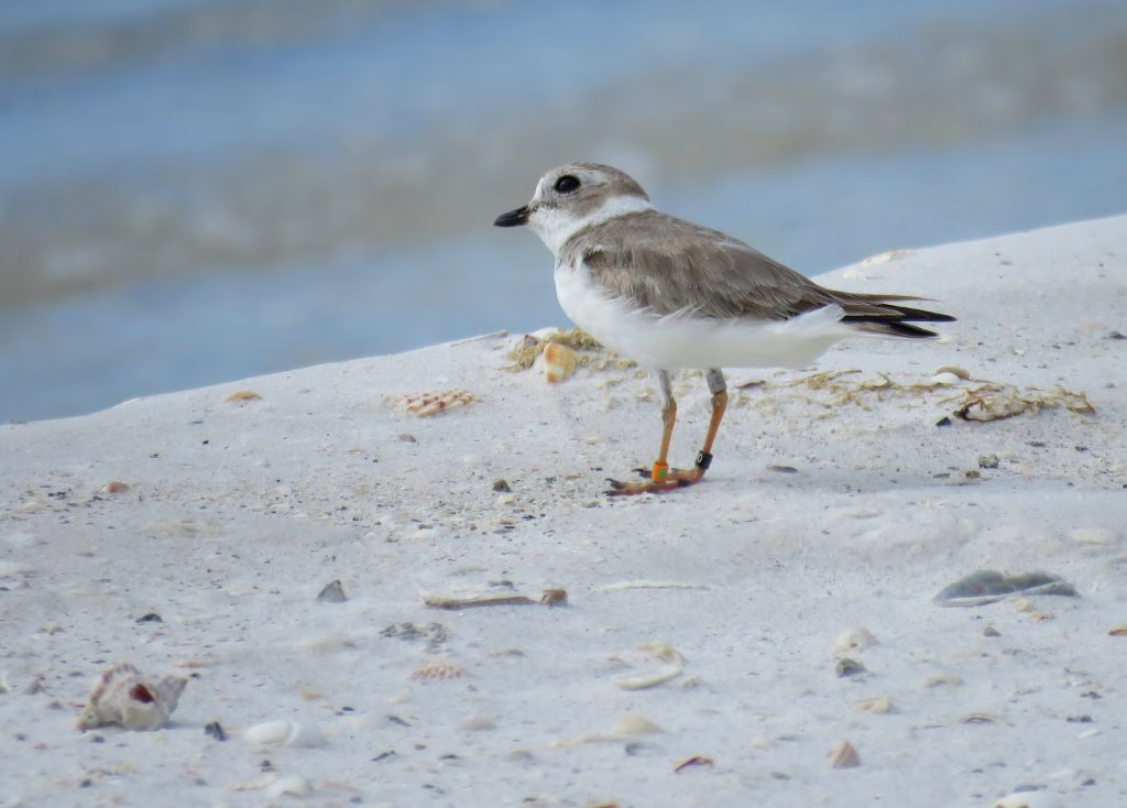 Beach Birding with Biologists
