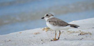 Beach Birding with Biologists