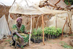 Ndeye with her seedling nursery