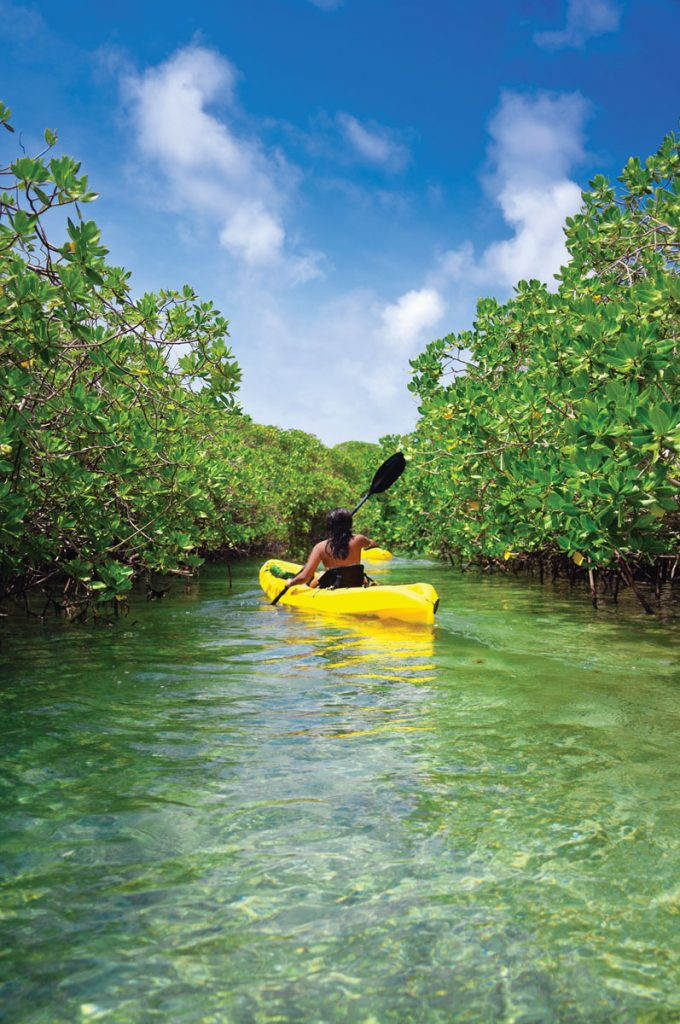 """Paddle among the mangroves at Ten Thousand Islands and J.N. """"Ding"""" Darling National Wildlife Refuge"""