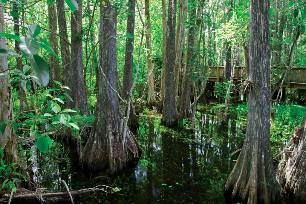 Explore the outdoors by traversing Southwest Florida's numerous mangrove-lined canals or visiting amazing natural areas such as the Everglades.