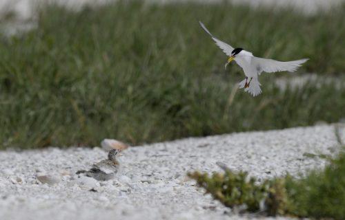 A Summer Break with Seabirds