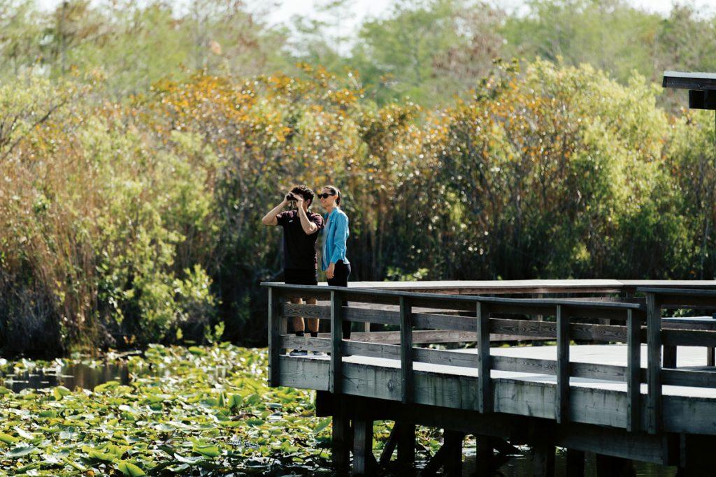 EVERGLADES NATIONAL PARK WILDLIFE Photo courtesy of Visit Florida/Paradise Media