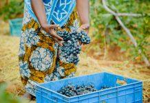 wine-sustainability