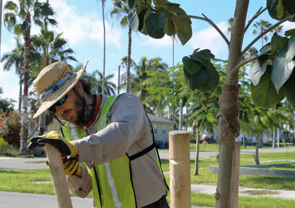 Danny Cox of Naples Botanical Garden stakes newly planted orange geiger tree.